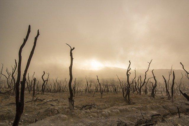 Un survivaliste souhaite t-il la fin de la civilisation ?