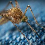 Qu'est ce qui attire les moustiques ?